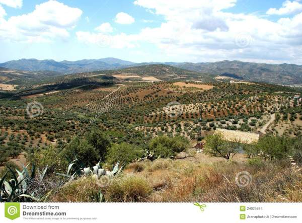 Axarquia Countryside Andalusia Spain. Stock - 24024974