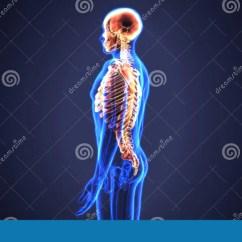 Axial Skeleton Skull Diagram Fasco 9721 Motor Wiring 3d Illustration Of Include Vertebral Column Svg The Details Identifiers Latinskeleton Axiale Taa02 0 00 009 Fma71221 Anatomical
