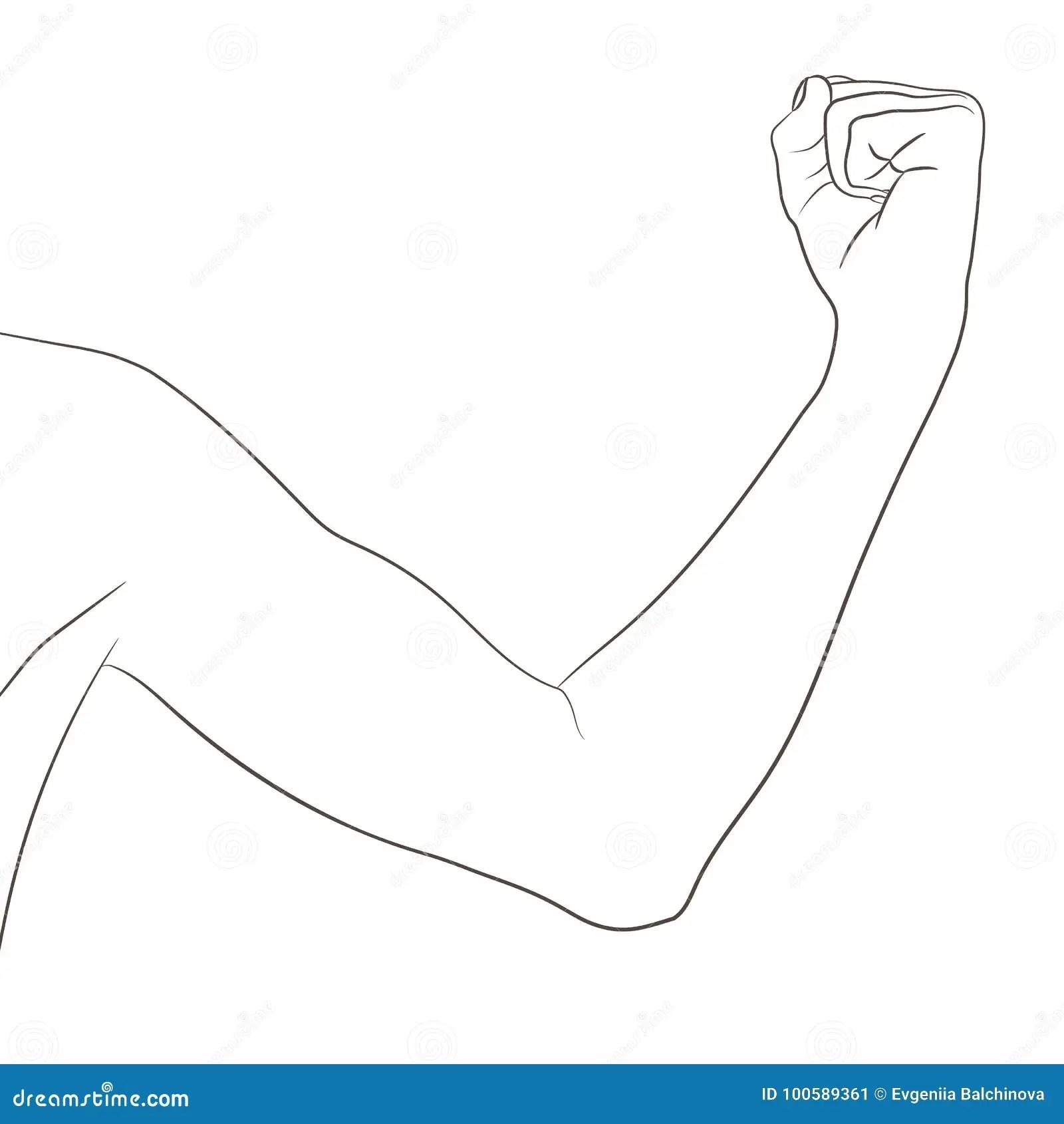 Biceps Femea Poco Tonificado Progresso Da Exibicao Do