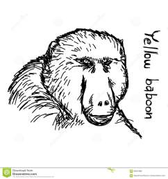 baboon vector illustration sketch hand drawn with black [ 1300 x 1390 Pixel ]
