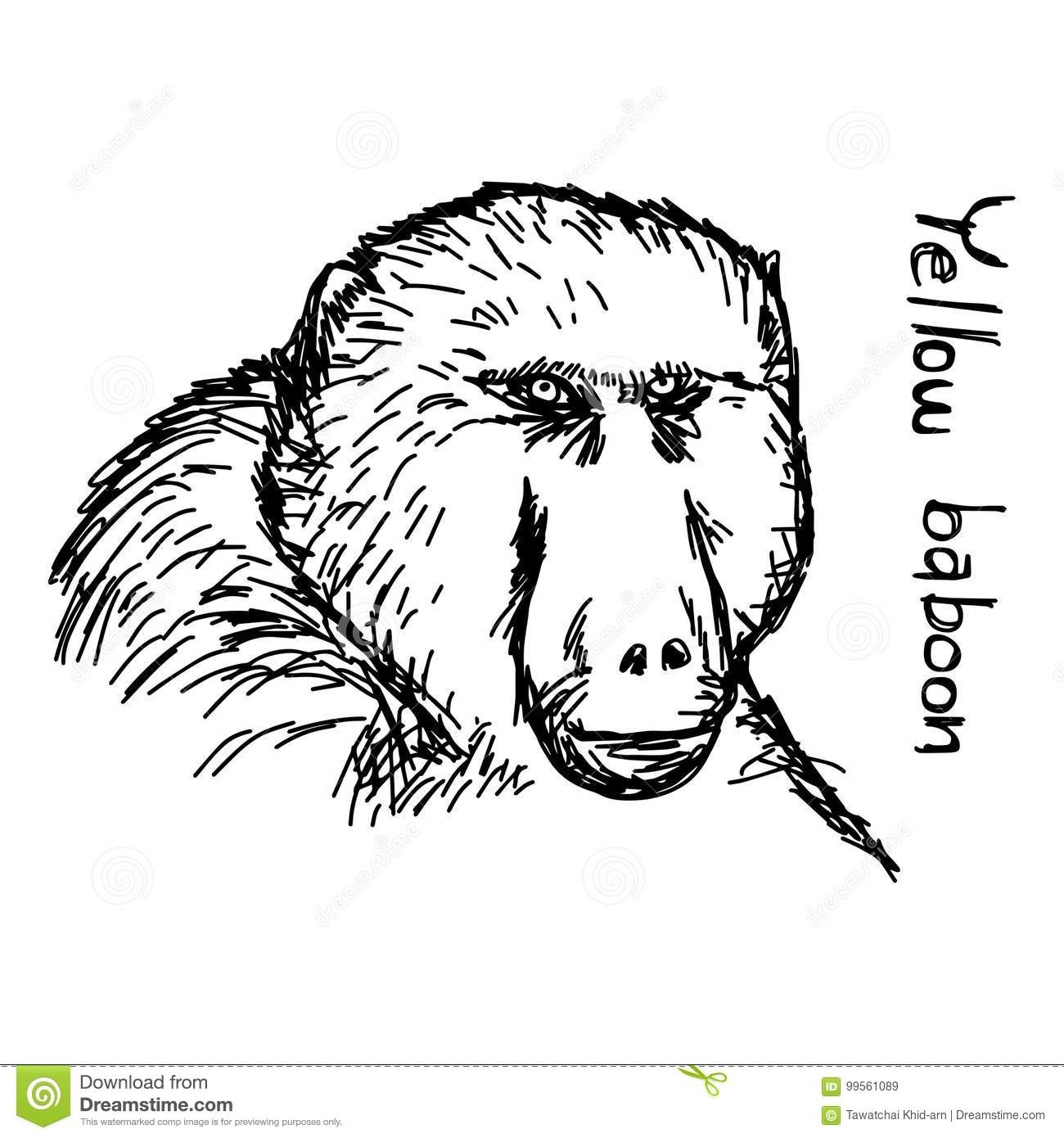 hight resolution of baboon vector illustration sketch hand drawn with black