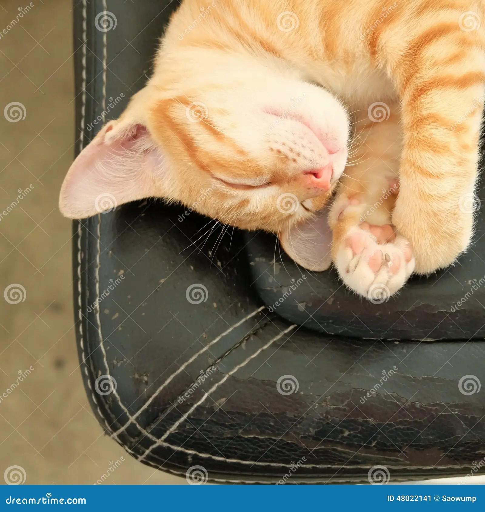 baby sleeping chair strathwood anti gravity cat sleep sweet dream stock image of kitten