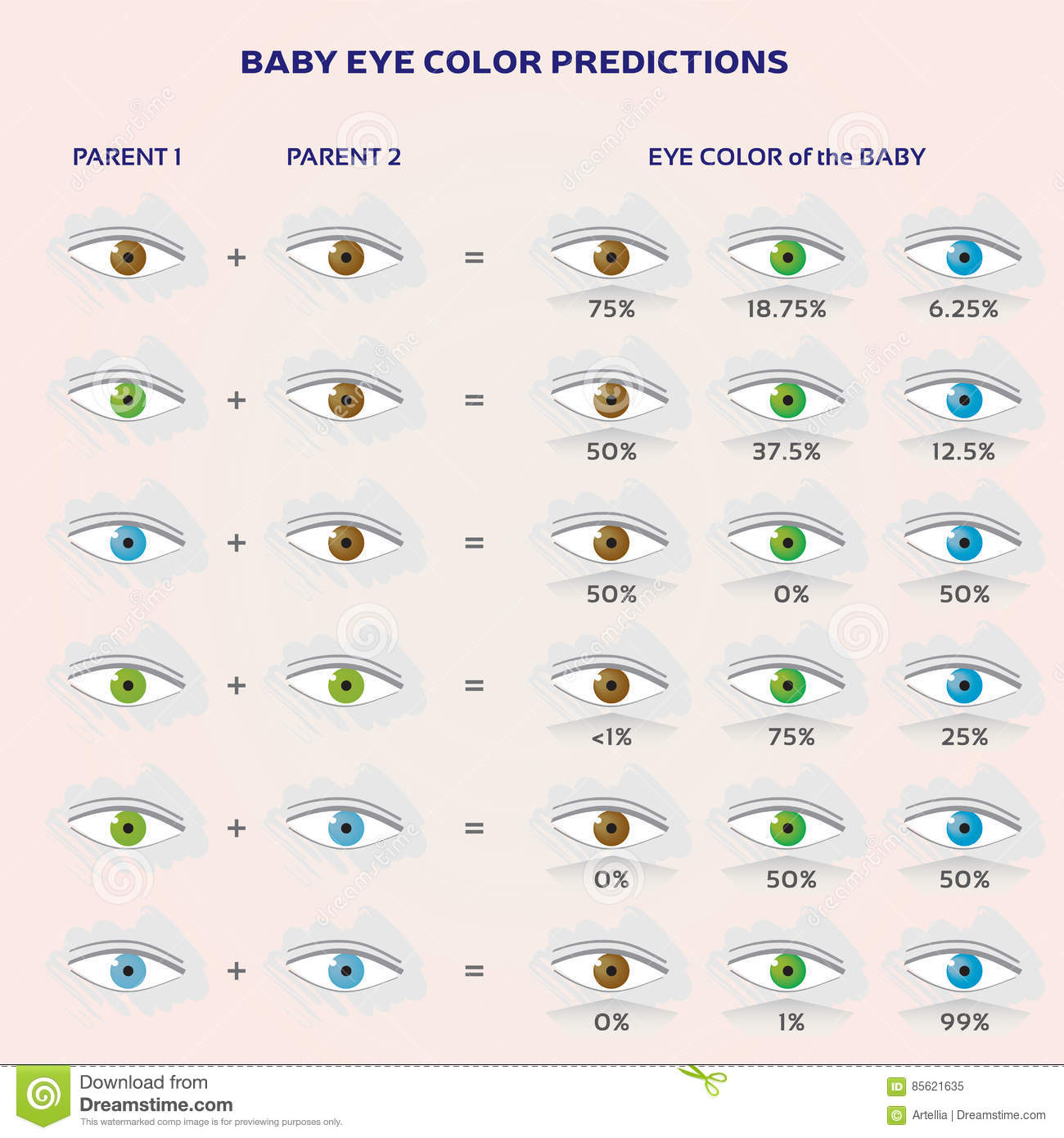 Baby Eye Color Prediction Chart