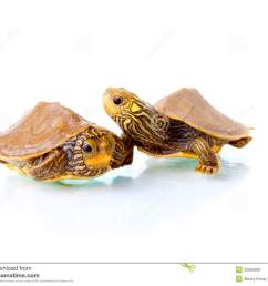 baby turtles [ 1300 x 1102 Pixel ]