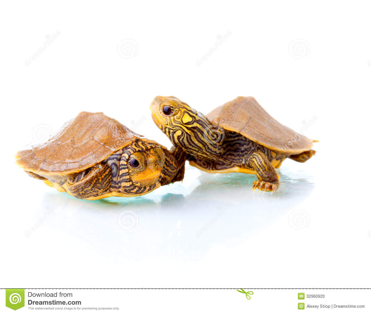 hight resolution of baby turtles