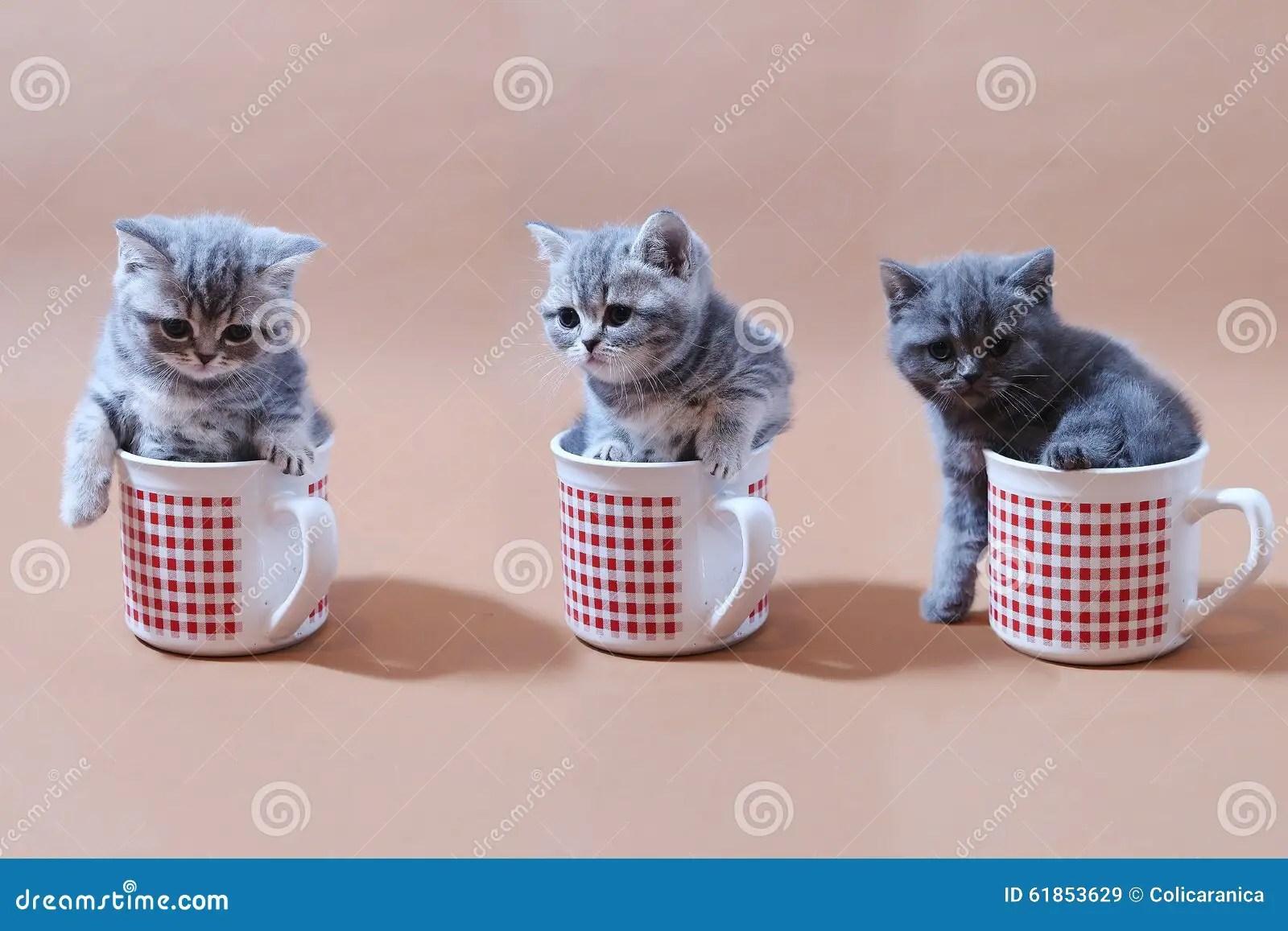 Babykatzen Stockfoto Bild 61853629