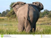End Of Elephant Royalty Free Stock