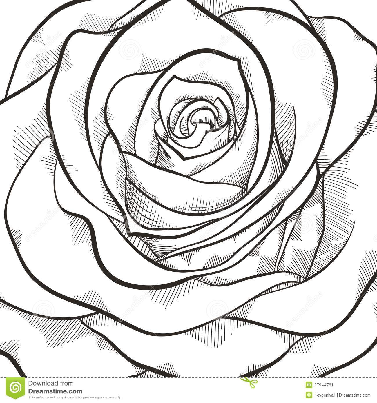 Background With Beautiful Black And White Rose Stock