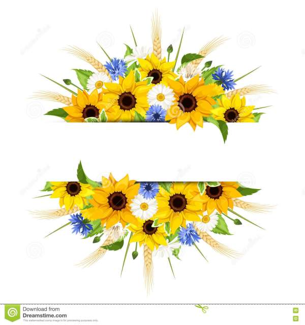 background with sunflowers daisies
