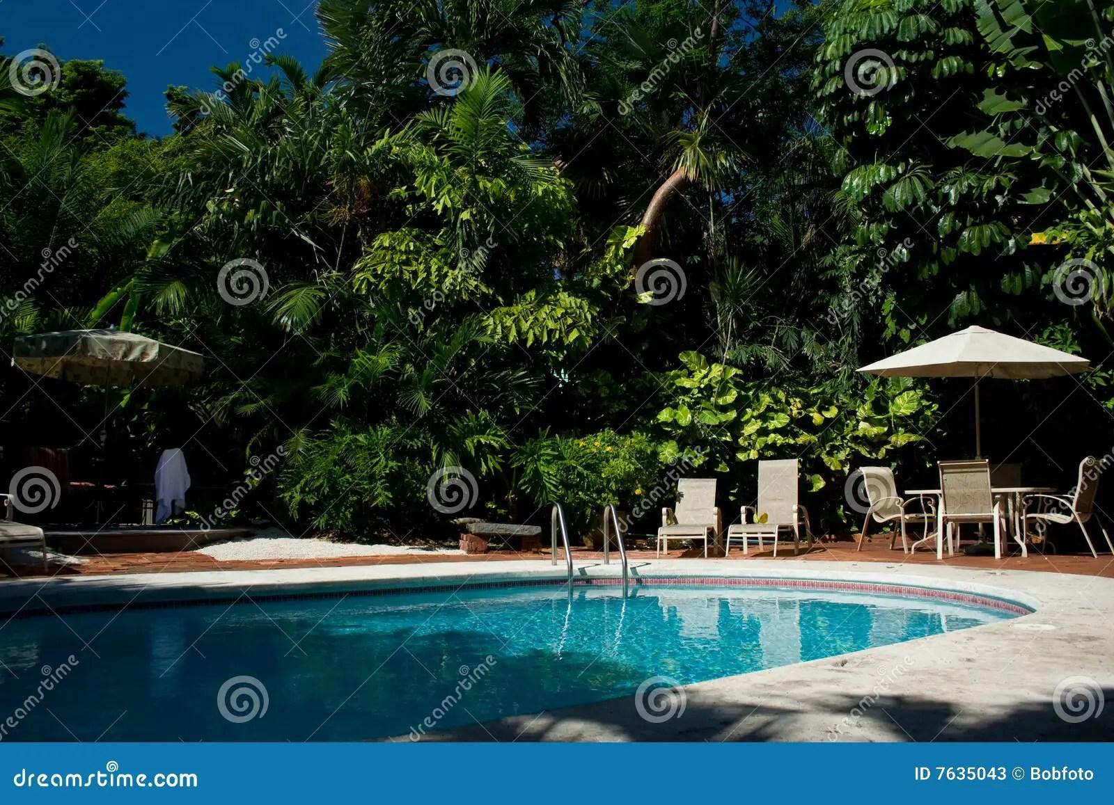 Backyard Pool With Palm Trees Stock Image Image 7635043