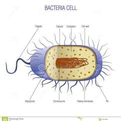 Bacterial Cell Diagram And Functions Nissan 350z 2005 Audio Wiring Bacteria Stock Vector Illustration Of Away Biology