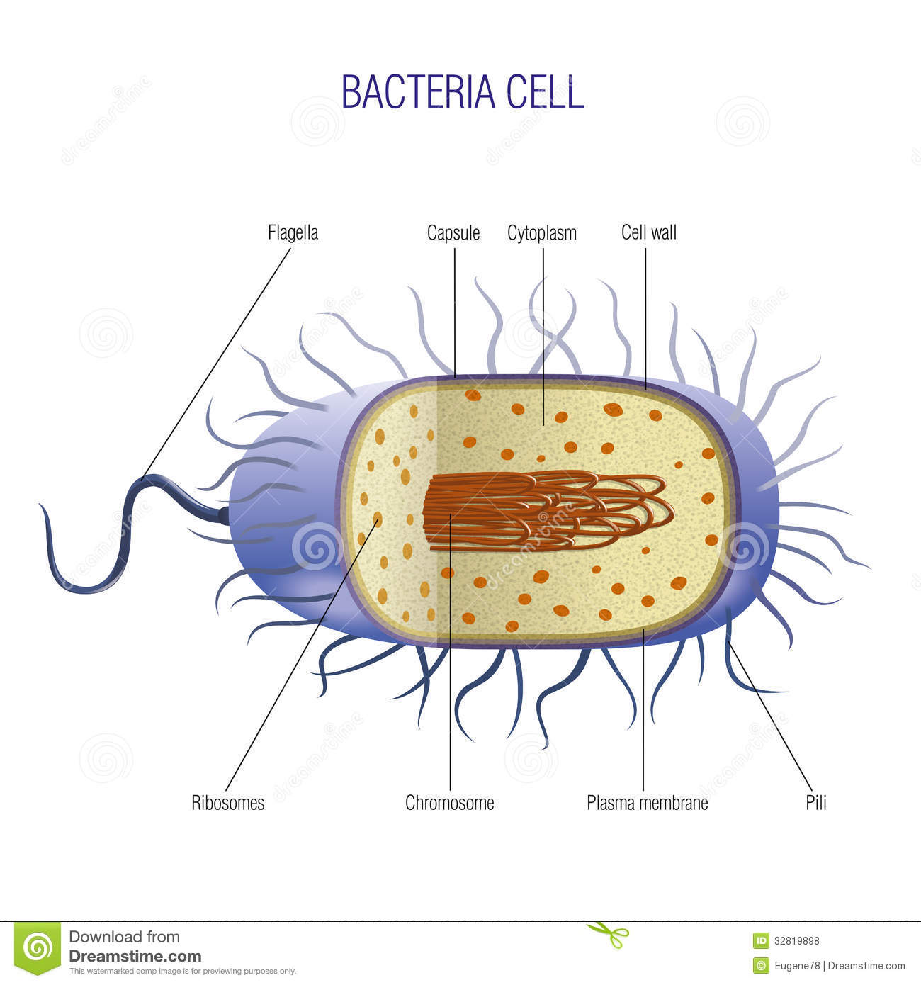 microbiology prokaryotic cell diagram labeled vw beetle type 1 wiring bacteria stock vector illustration of away biology