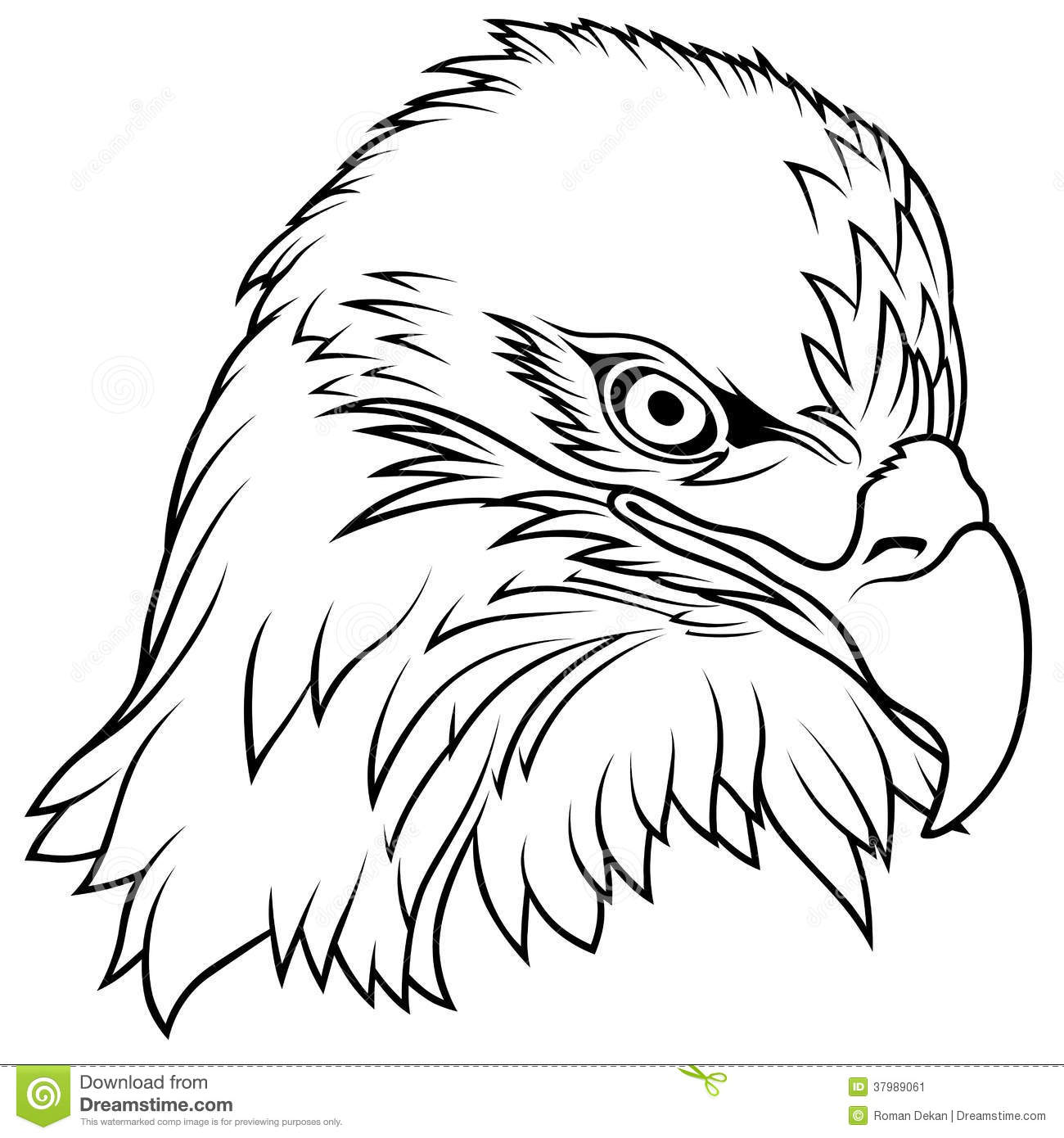 Stock Image Bald Eagle Head Image
