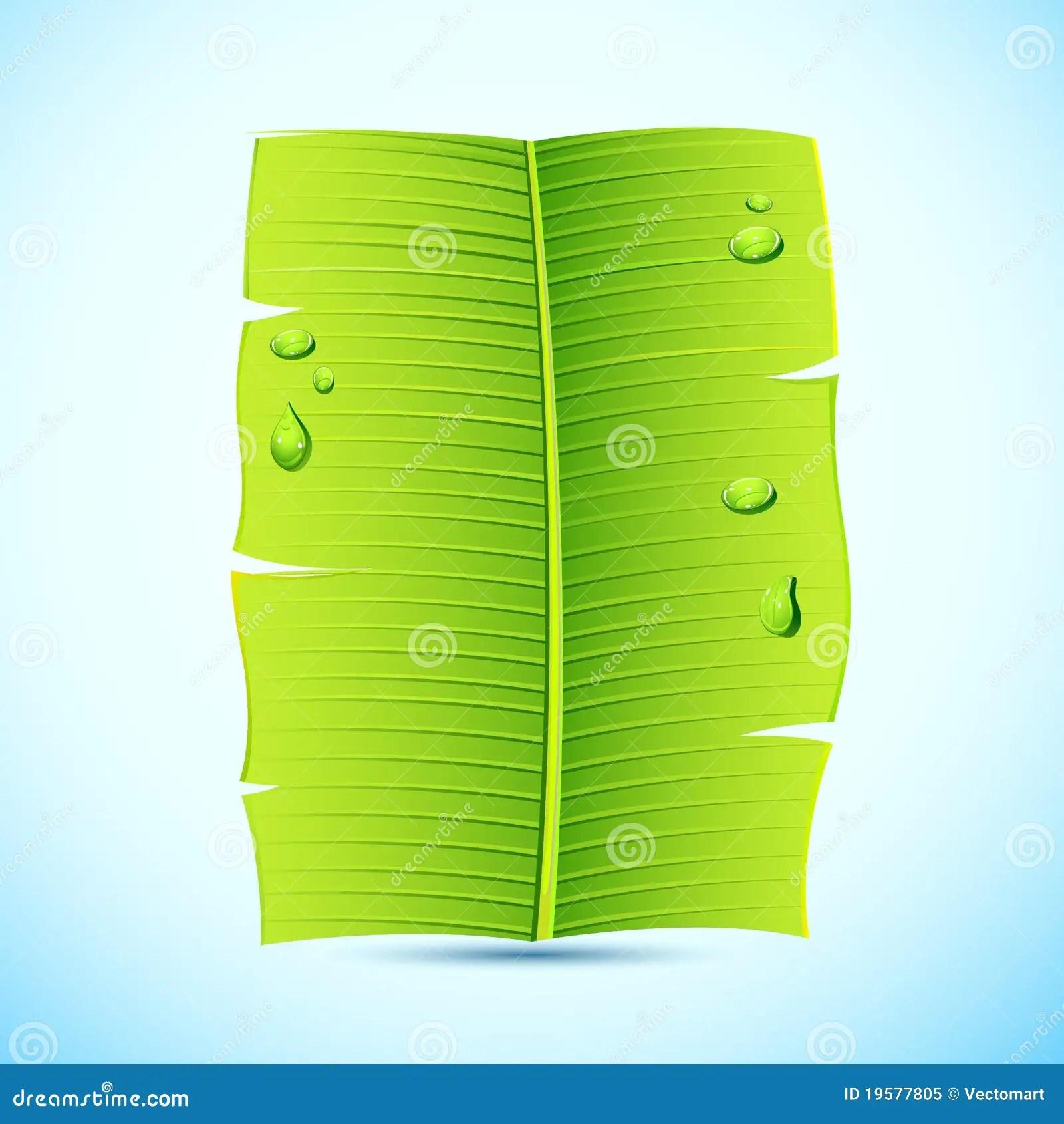 Banana Leaf Invitation Letter Stock Vector  Illustration