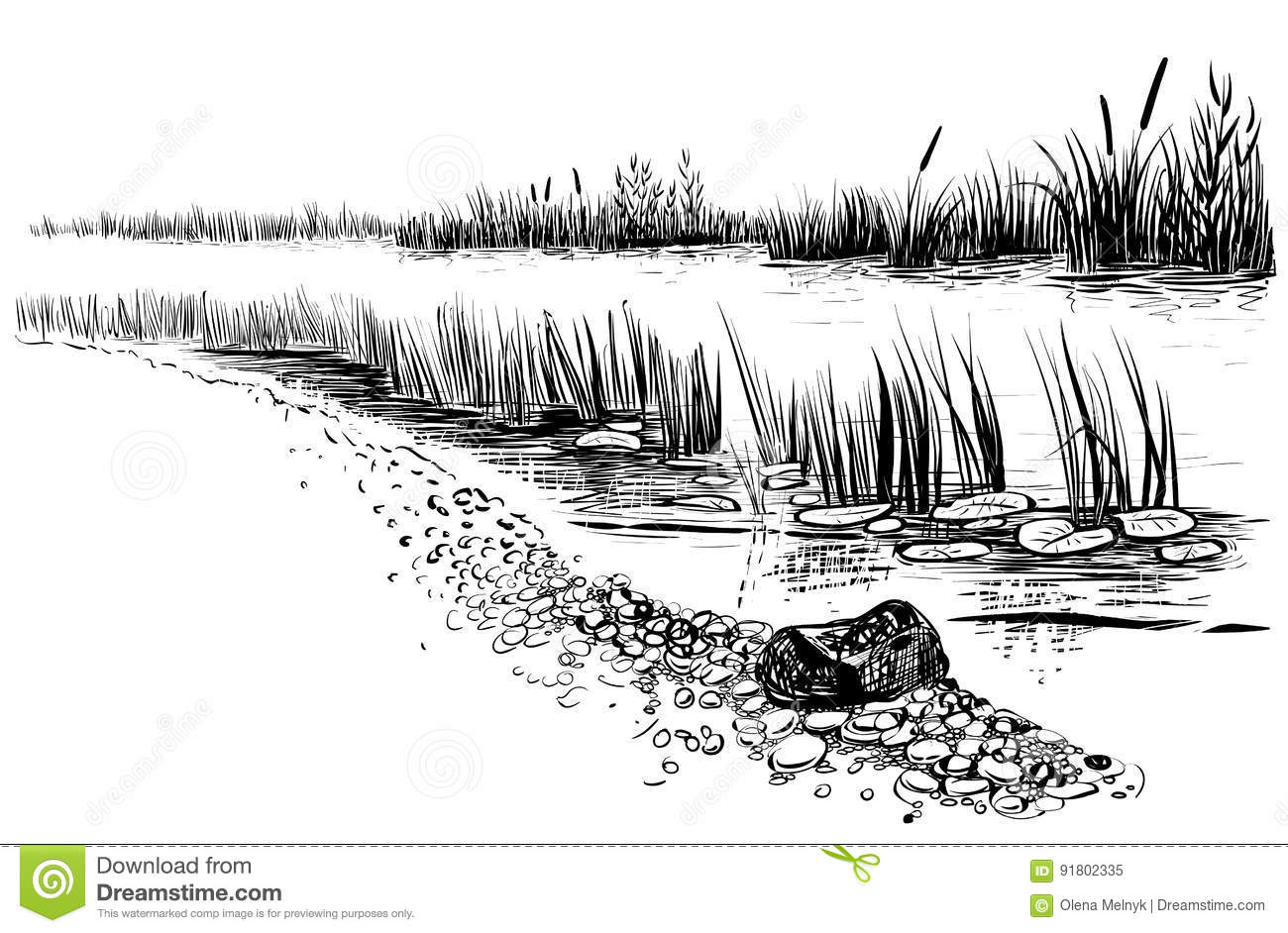 Bank Of The River Or Swamp With Reed And Cattail Sketchy