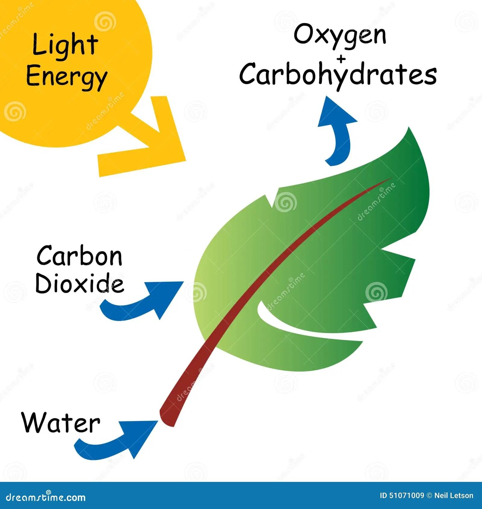 basic carbon cycle diagram 3406e jake brake wiring illustration of photosynthesis stock