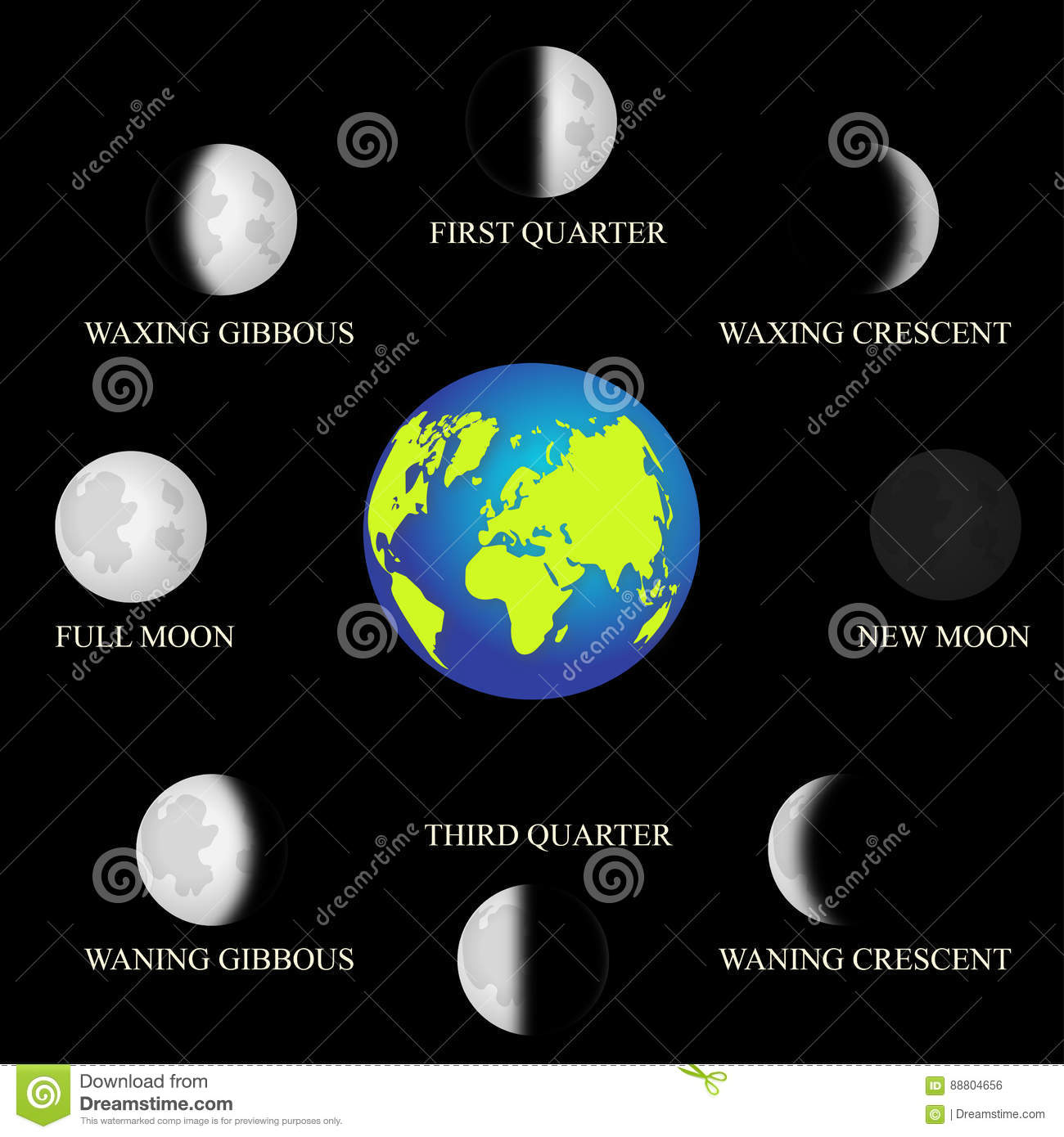 Basic Phases Of The Moon Stock Vector Illustration Of