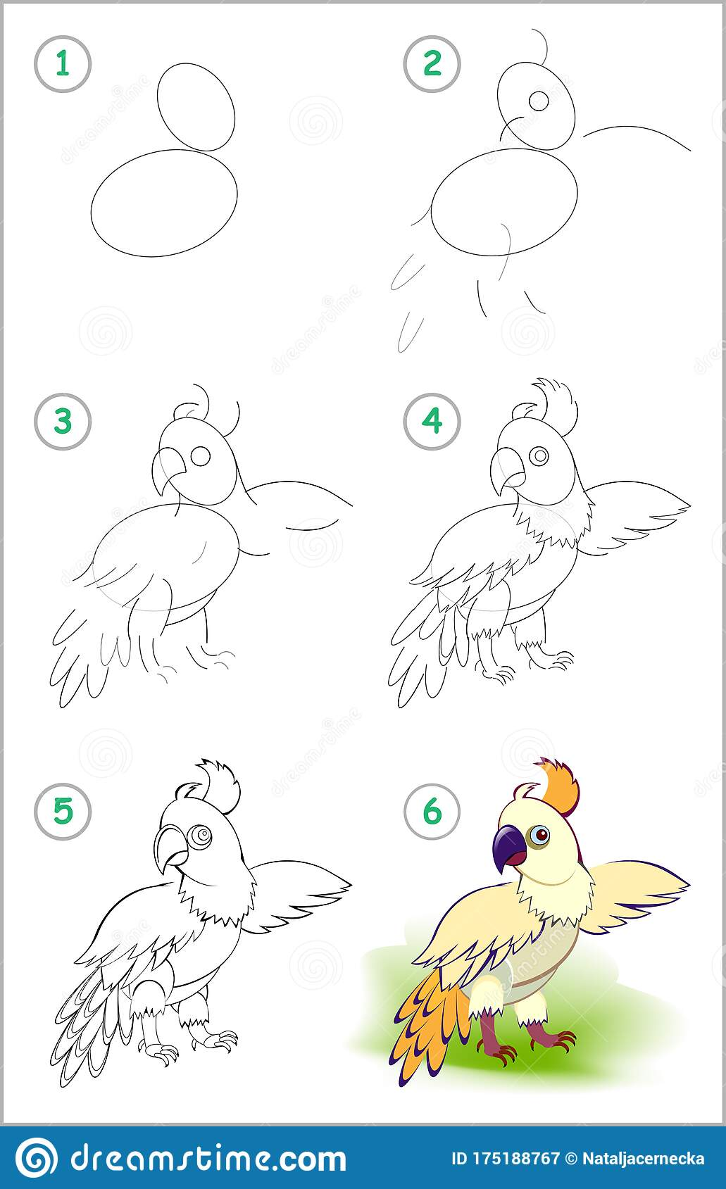 How To Draw Step By Step Cute Little Parrot Educational