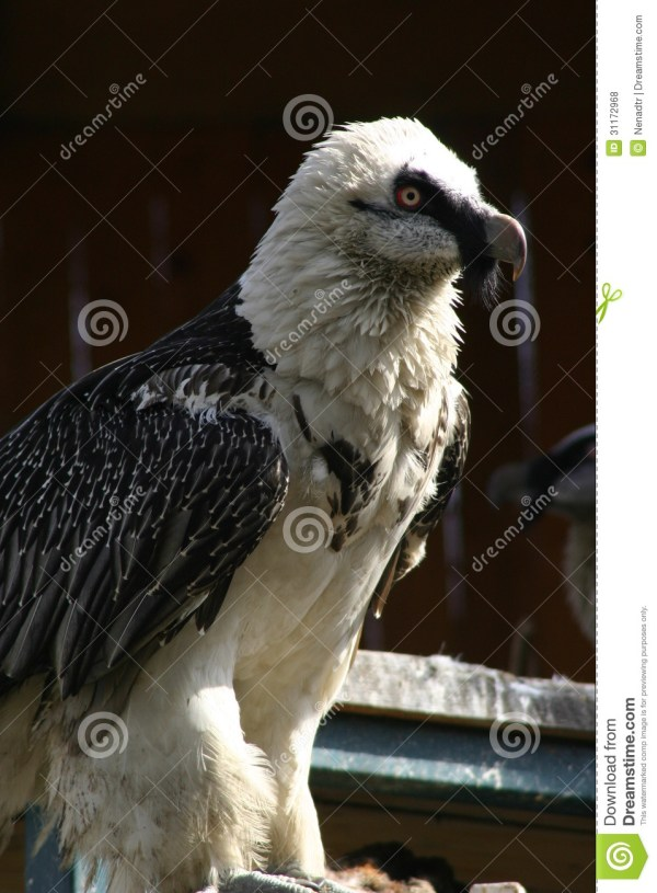 20 Lammergeier Vulture Food Chain Pictures And Ideas On Meta Networks