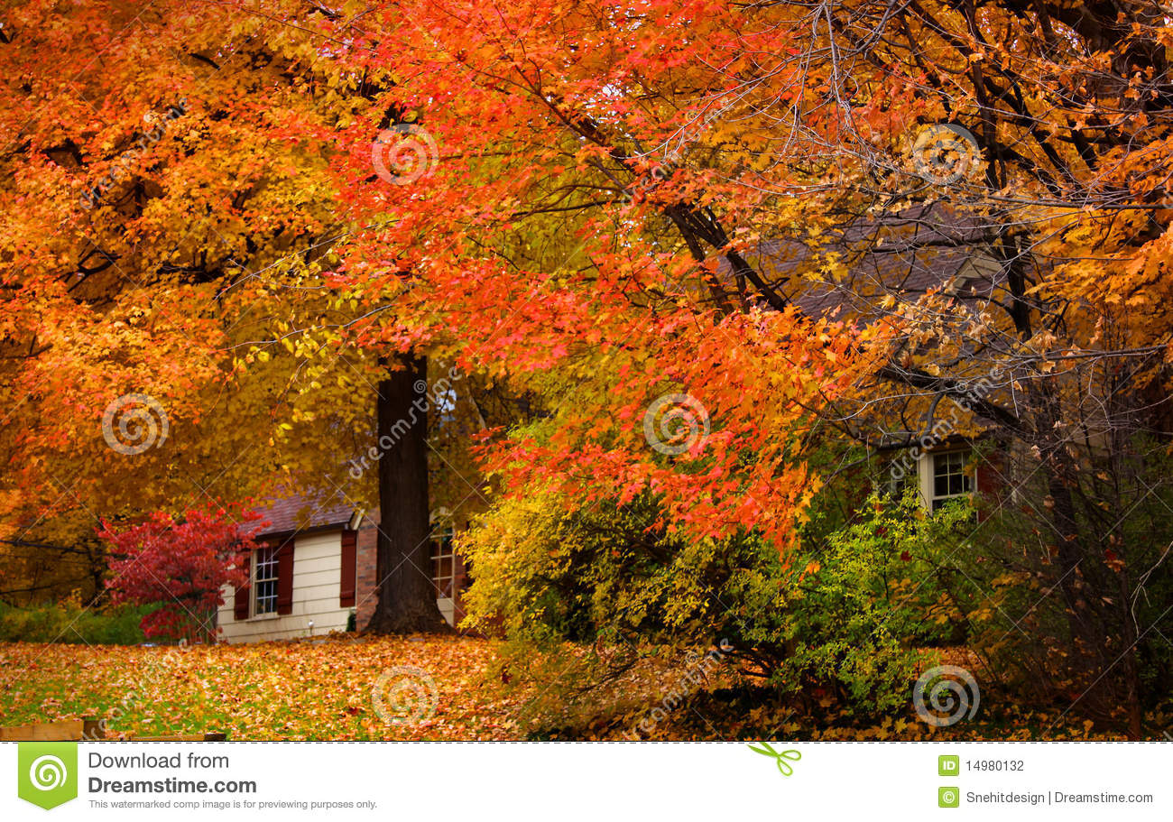 Fall Vector Wallpaper Beautiful Autumn Landscape Stock Photography Image 14980132