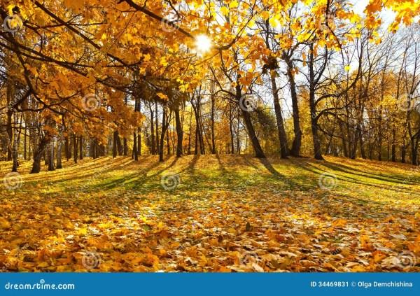 beautiful autumn landscape stock