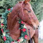 Portrait Of A Horse Wearing Beautiful Christmas Garland Decorations Stock Image Image Of Event Bridle 133128409