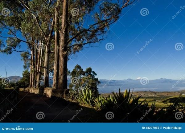 beautiful dry landscape of