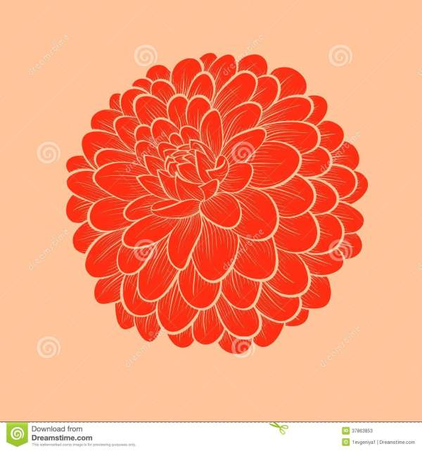 Beautiful Flower Dahlia Drawn In Graphical Style C Stock