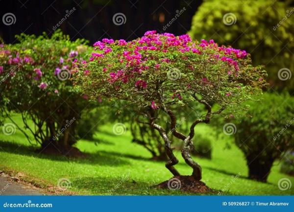 beautiful green garden lawn