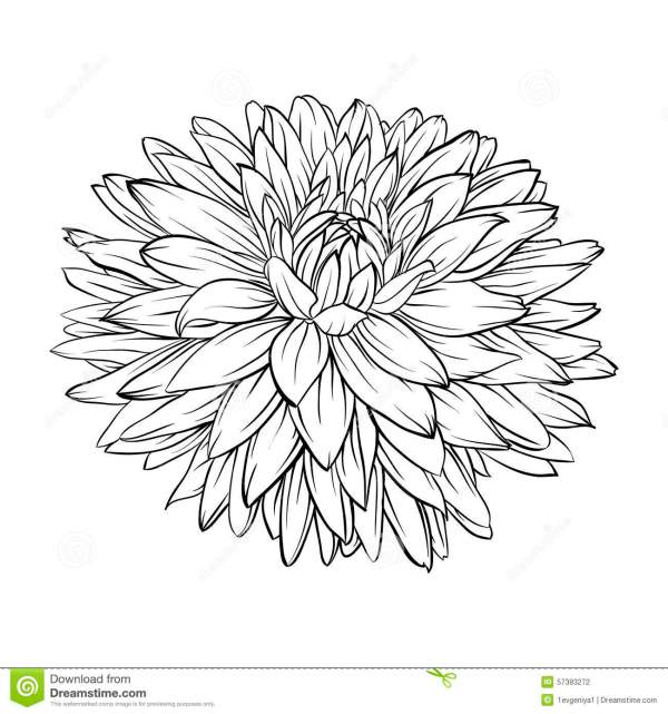 Beautiful Monochrome Black And White Dahlia Flower