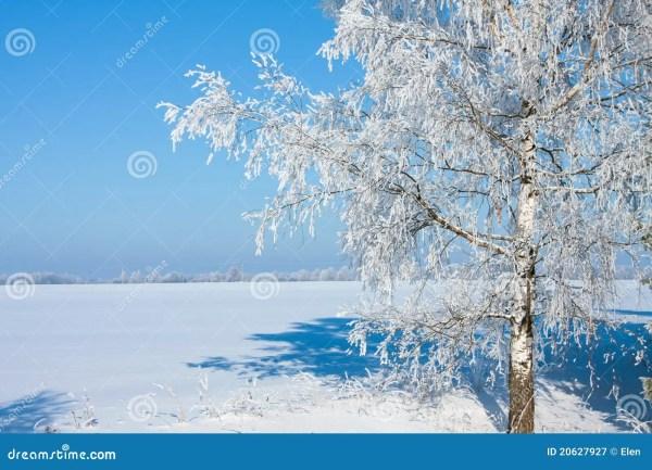 Beautiful Nature Winter Stock Of White - 20627927
