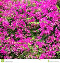 Beautiful Pink Flower Background. Stock Photo - Image ...