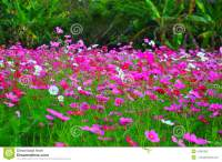 cliserpudo: Beautiful Pink Flower Gardens Images