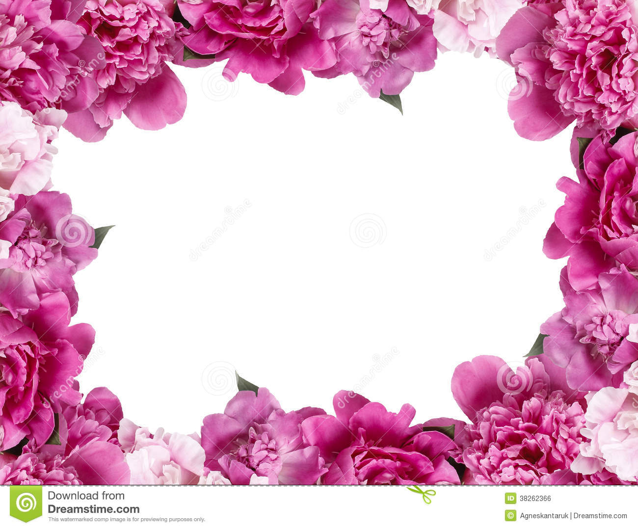 Beautiful Pink Peonies On White Background Royalty Free