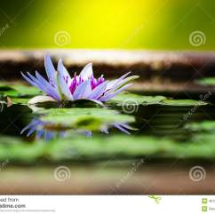 Lotus In Water Plant Diagram Memphis Audio Wiring Diagrams Beautiful Purple With Reflection Stock