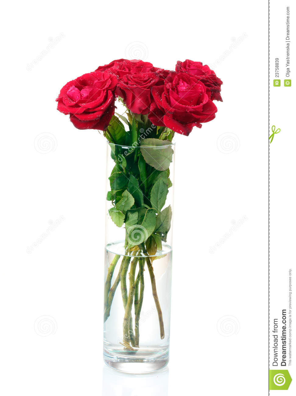 Beautiful Red Roses In A Vase Stock Image  Image of drops