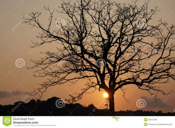 Beautiful Tree Silhouettes Sunset