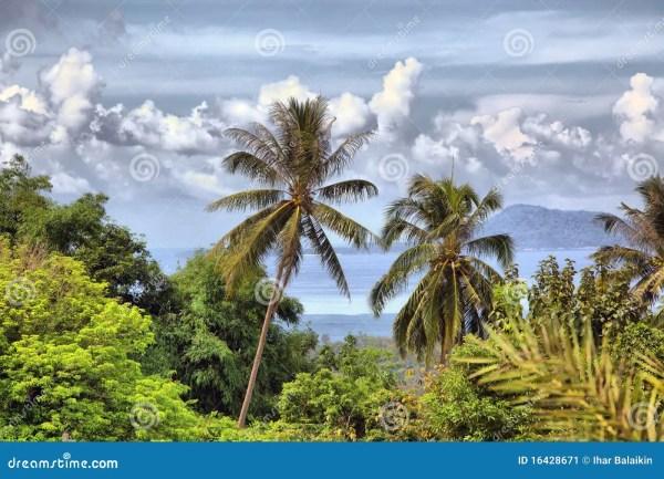 beautiful tropical landscape stock