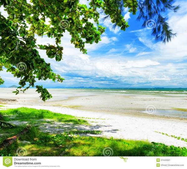 beautiful tropical landscape. samui
