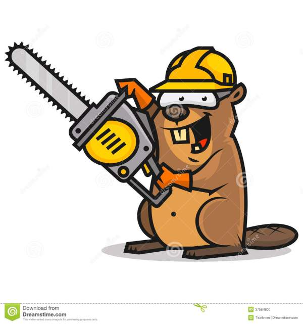 beaver holds chainsaw stock vector