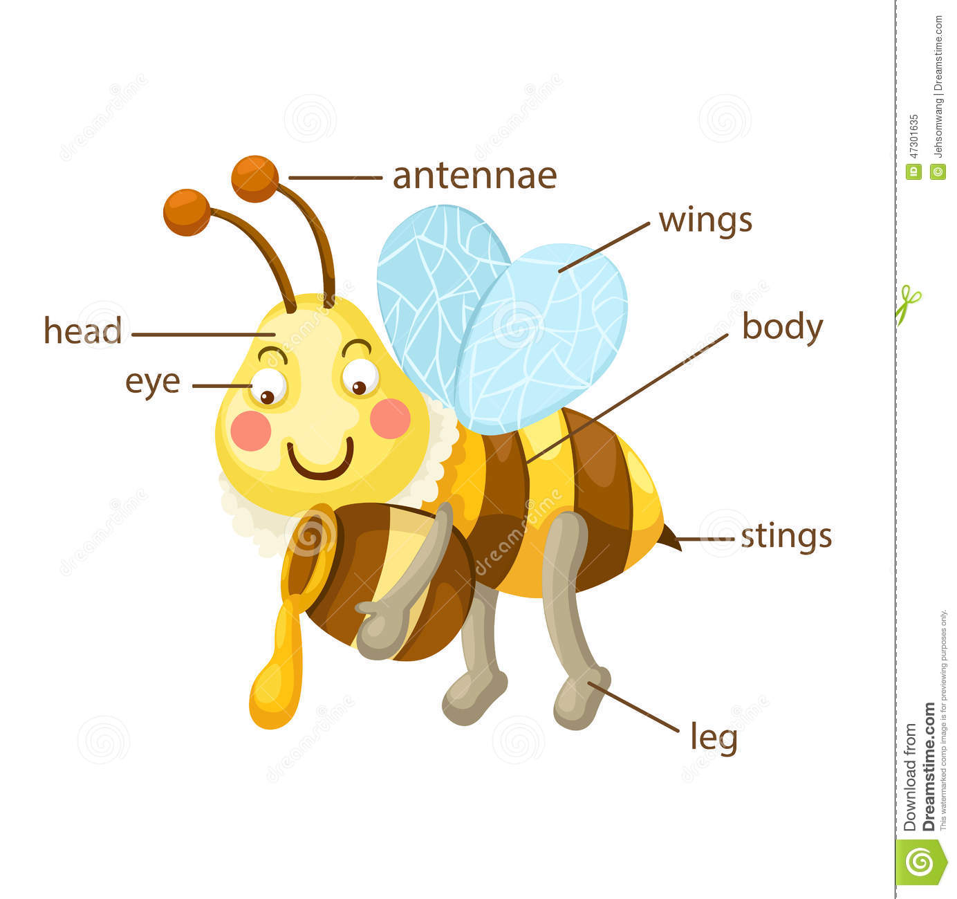 Bee Vocabulary Part Of Body Stock Vector