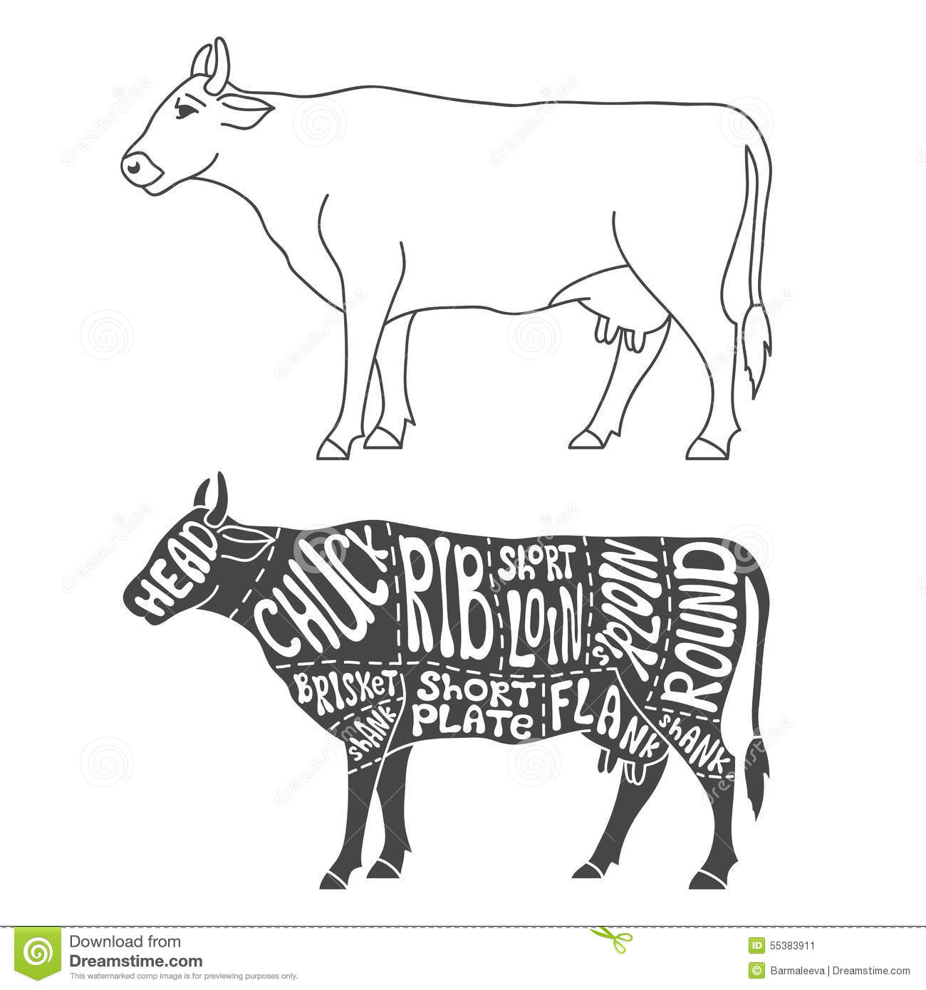 Beef Cuts Diagram Stock Vector Illustration Of