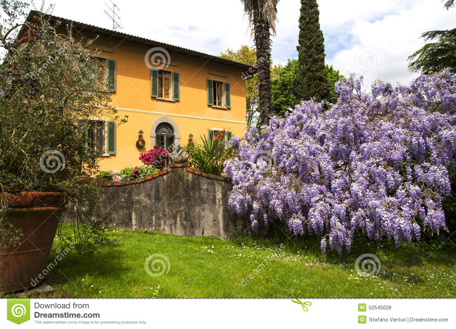 Bella Casa Di Campagna In Toscana Con La Grande Pianta Delle Glicine Fotografia Stock  Immagine