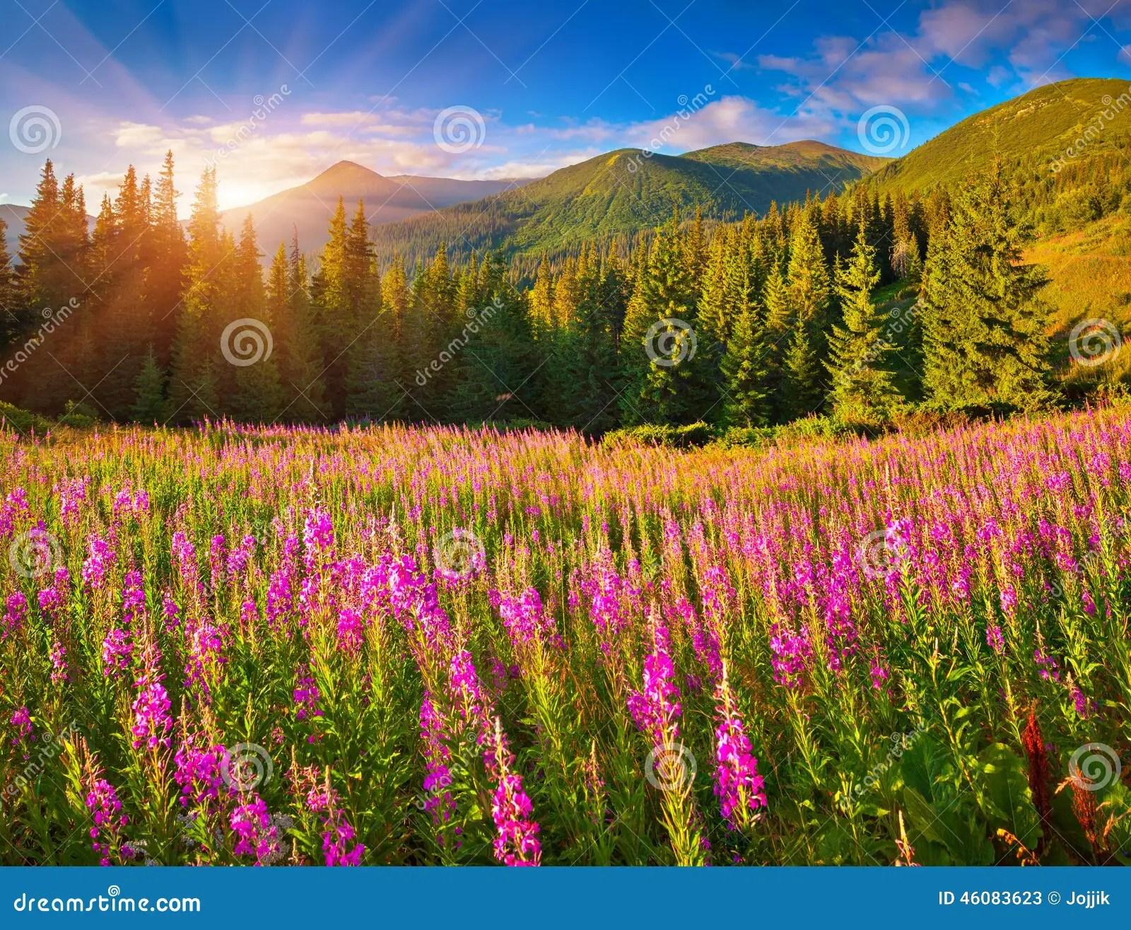 Bello Paesaggio Di Autunno In Montagne Con I Fiori Rosa Immagine Stock  Immagine di
