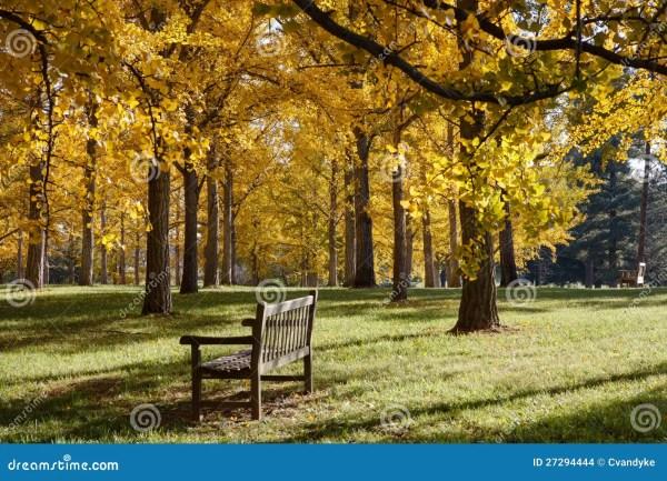 Bench In Ginkgo Grove Virginia Arboretum Stock - 27294444
