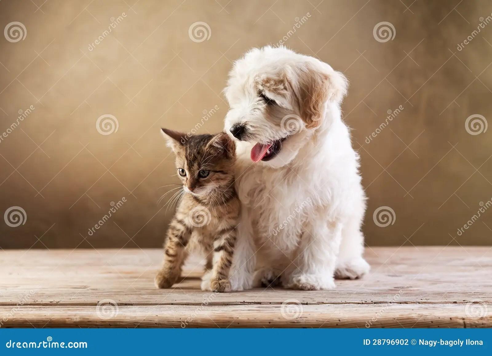 Free Cute Kitten Wallpapers Best Friends Kitten And Small Fluffy Dog Stock Photo