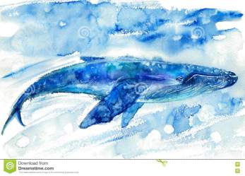 Realistic Whale Stock Illustrations 670 Realistic Whale Stock Illustrations Vectors & Clipart Dreamstime