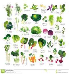 big clip art collection with various kind of vegetables and common culinary herbs [ 1300 x 1390 Pixel ]