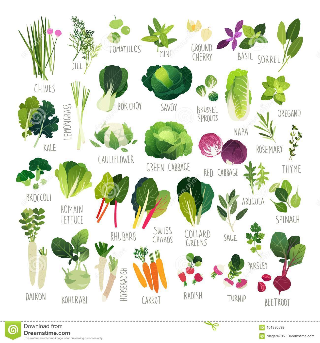 hight resolution of big clip art collection with various kind of vegetables and common culinary herbs