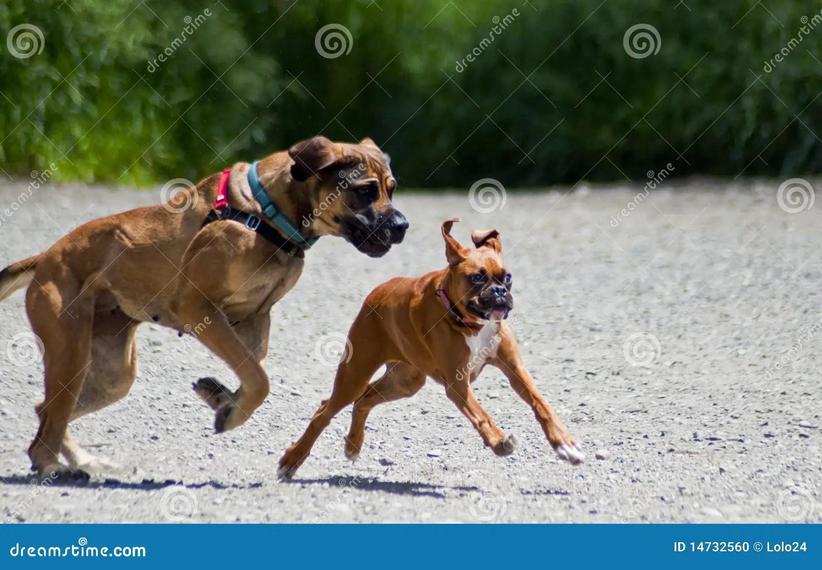 Big Dog Little Dog Stock Photo Image Of Companions Leaps